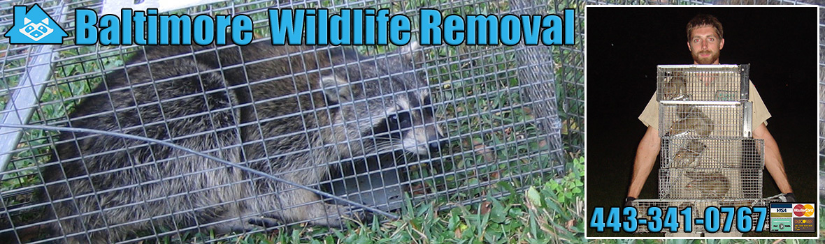 Baltimore Wildlife and Animal Removal